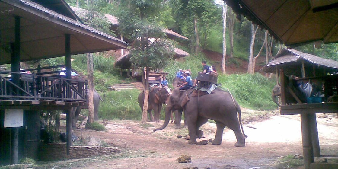 Thai69